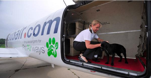 Pet Airways Image