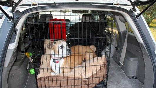Dog in Car in Crate