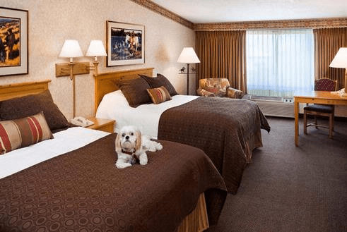 Small white dog laying on a bed in a pet friendly hotel room