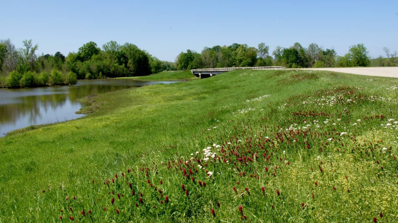 Wildflowers - Natchez Trace Parkway