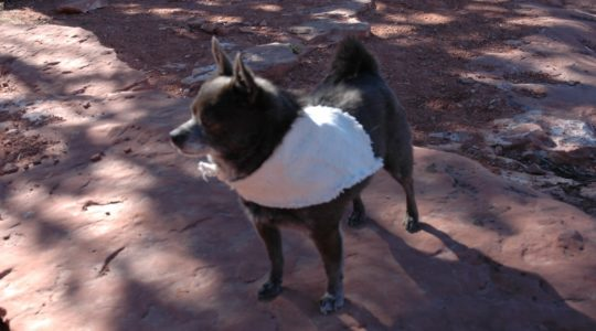 Mary's Dog - Sedona, AZ