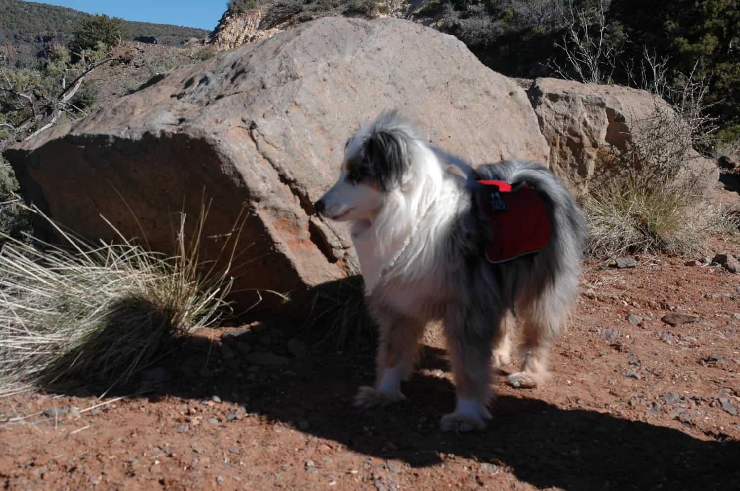 Pet Travelers Visit Sedona, Arizona