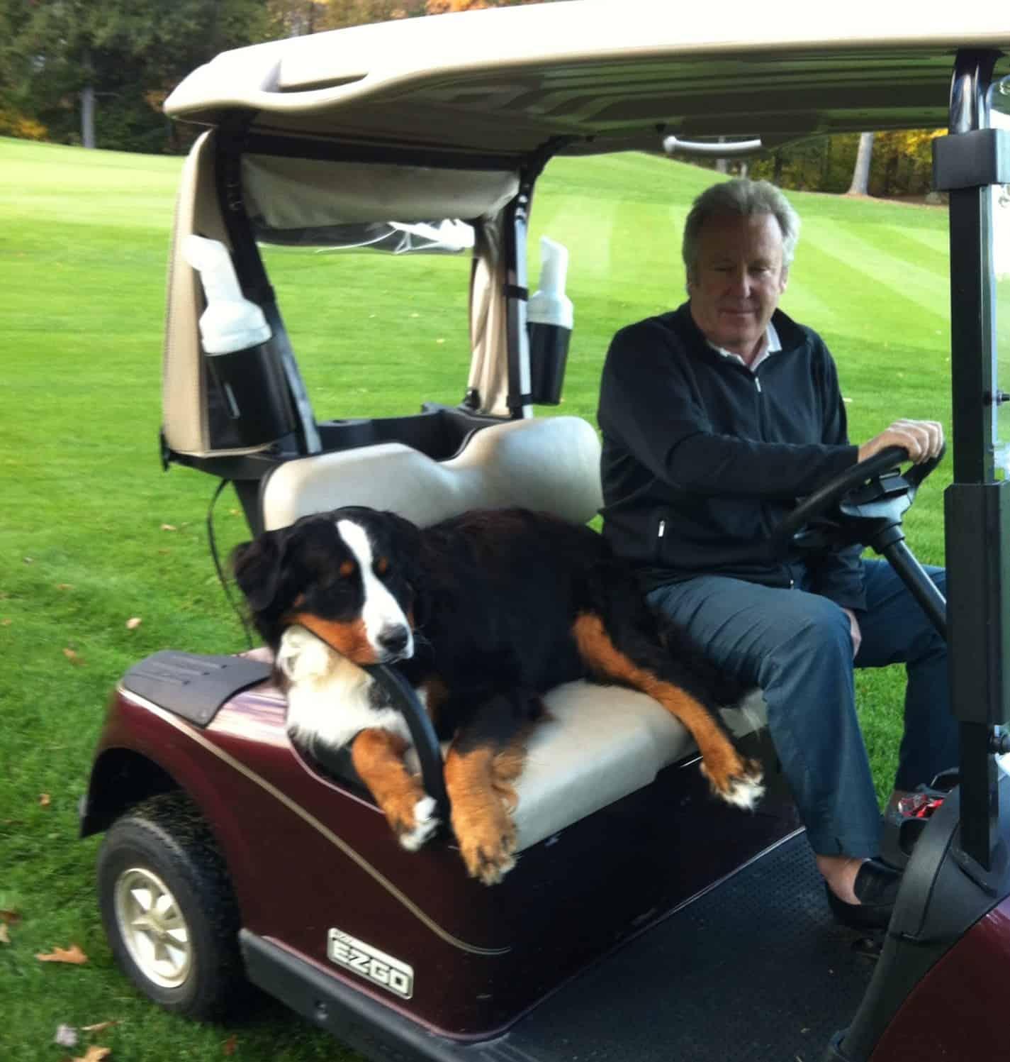 Golf Dogs 1