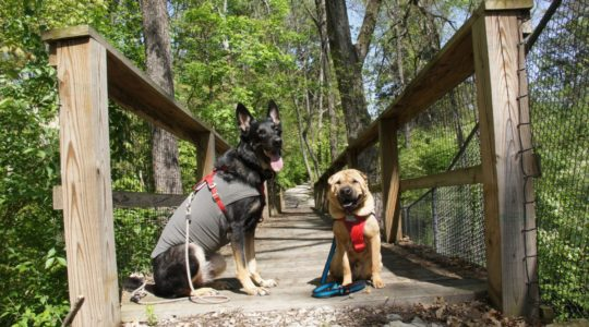 Buster and Ty and Bernheim Forest - Louisville, KY