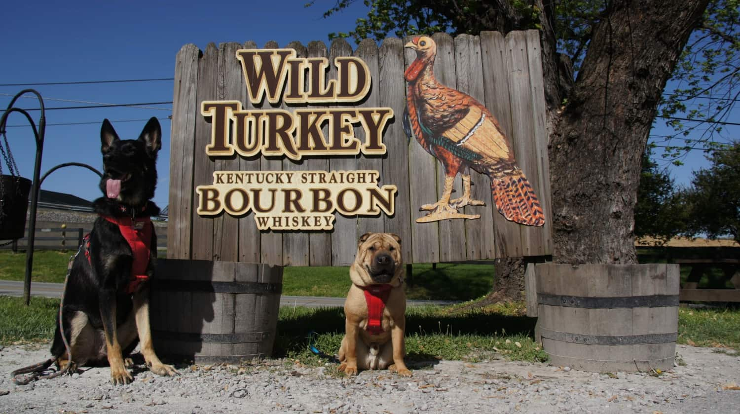Barking Along Kentucky's Bourbon Trail