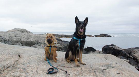 Dog Friendly Cliff Walk - Newport, RI
