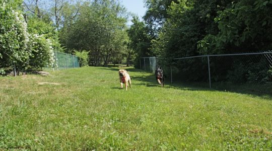 Strawberry Farms Dog Park - Preston, CT