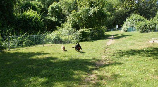 Strawberry Farms Dog Park - Preston, CT