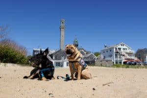 Buster and Ty on the Beach - Provincetown, MA