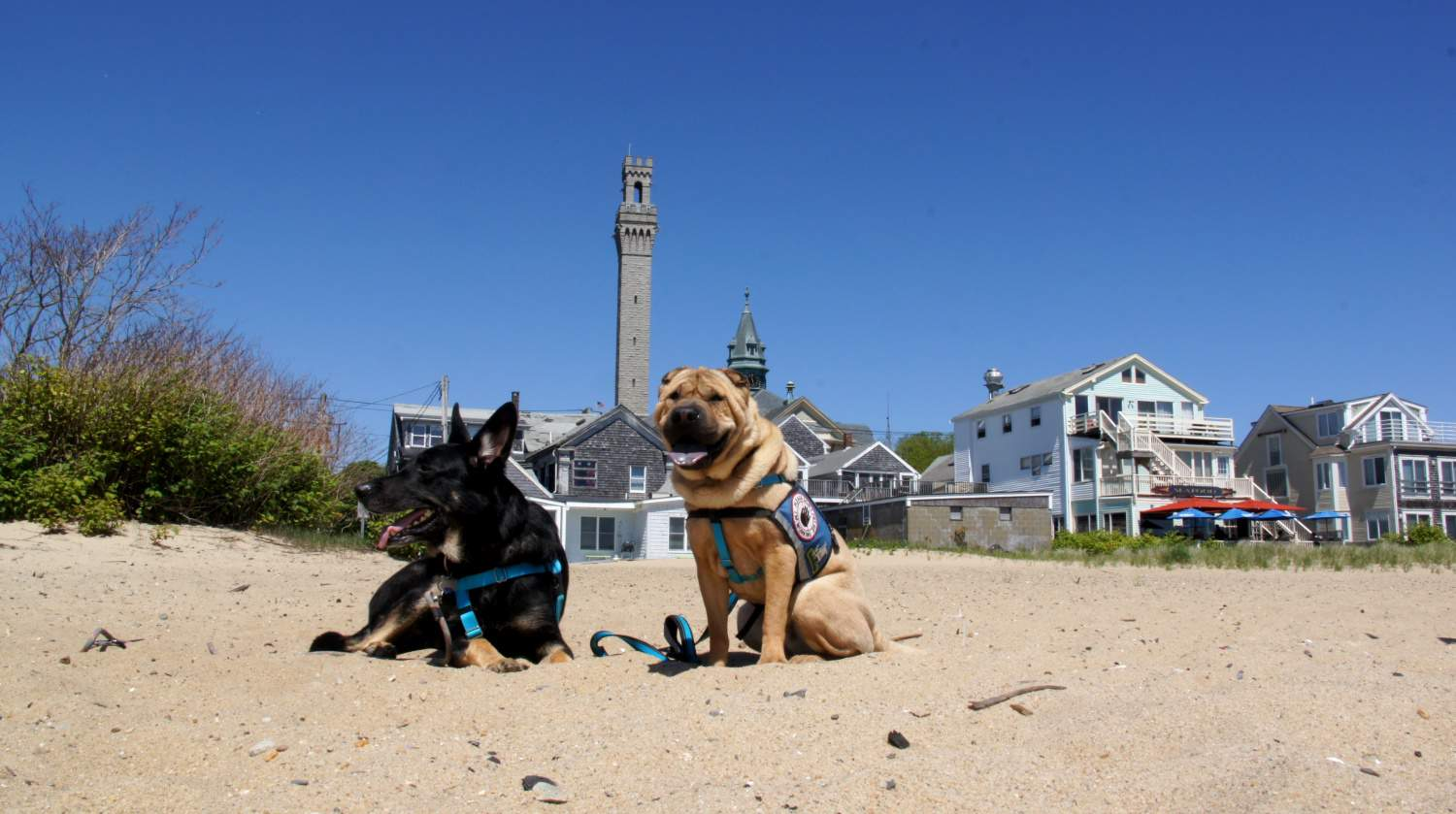 Provincetown is Most Pet Friendly