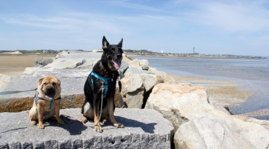 Ty and Buster - Provincetown, MA
