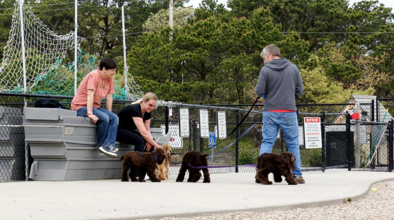 Dog Park - Provincetown, MA