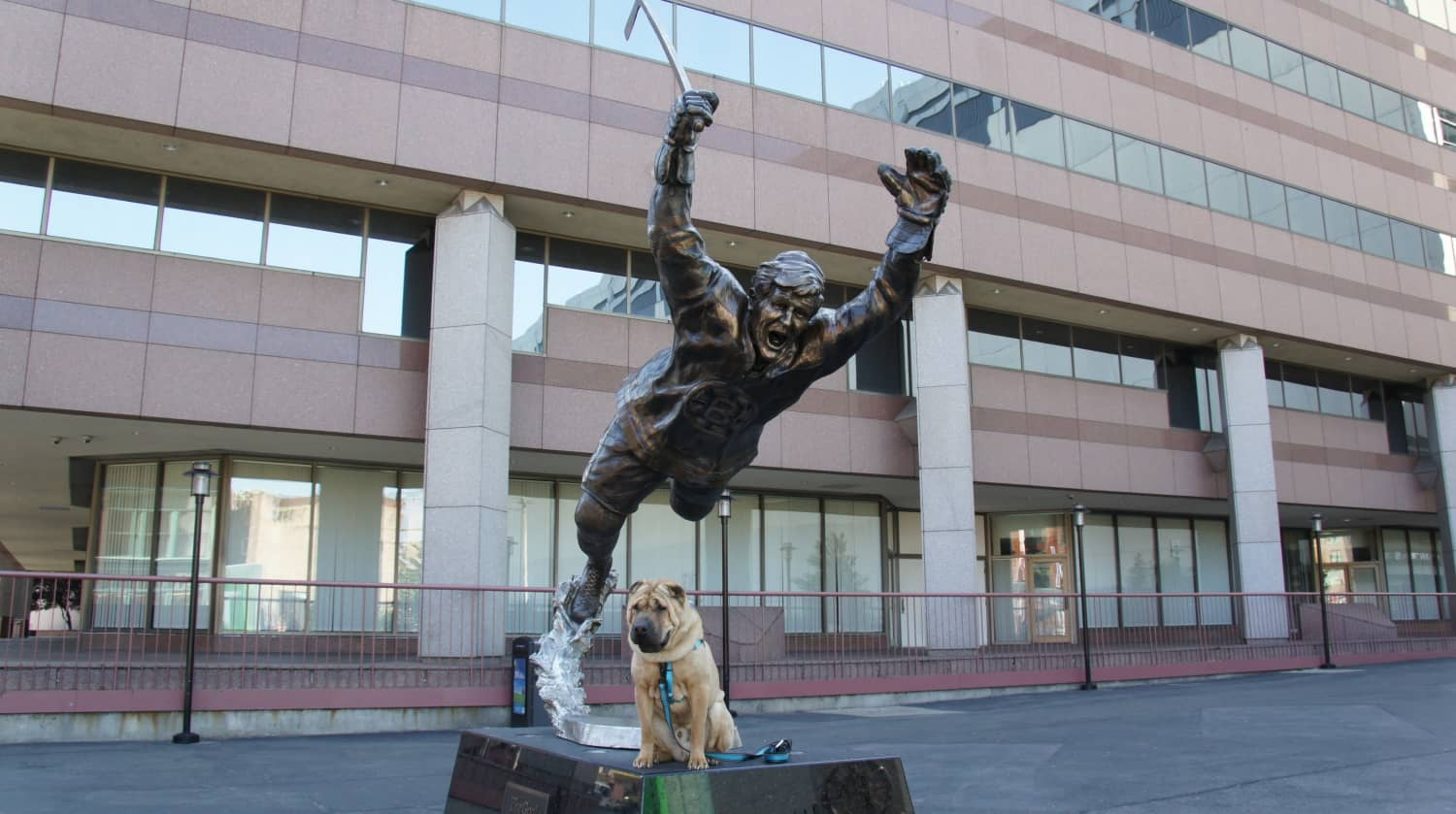 Boston Sports Plenty of Pet Friendly Options