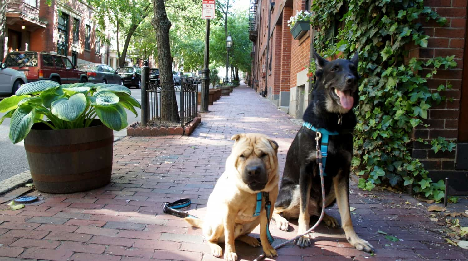 Ty and Buster on Beacon Hill - Boston, MA
