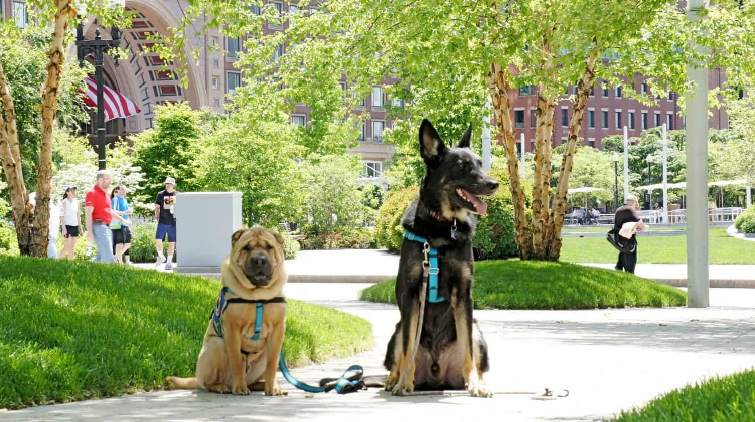 Ty and Buster - Boston, MA