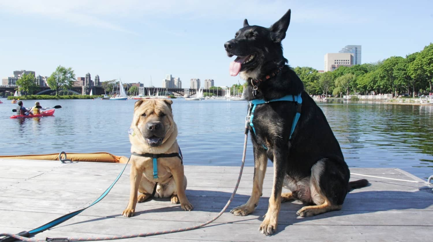 Ty and Buster on the Charles River Esplanade - Boston, MA