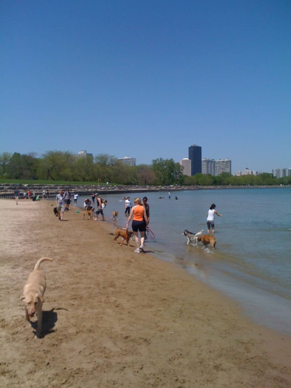 Dogs on Lakefront - Chicago, IL