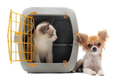 Kitten In Carrier