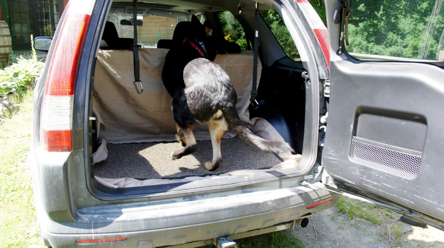 Buster Jumping in Rental Car