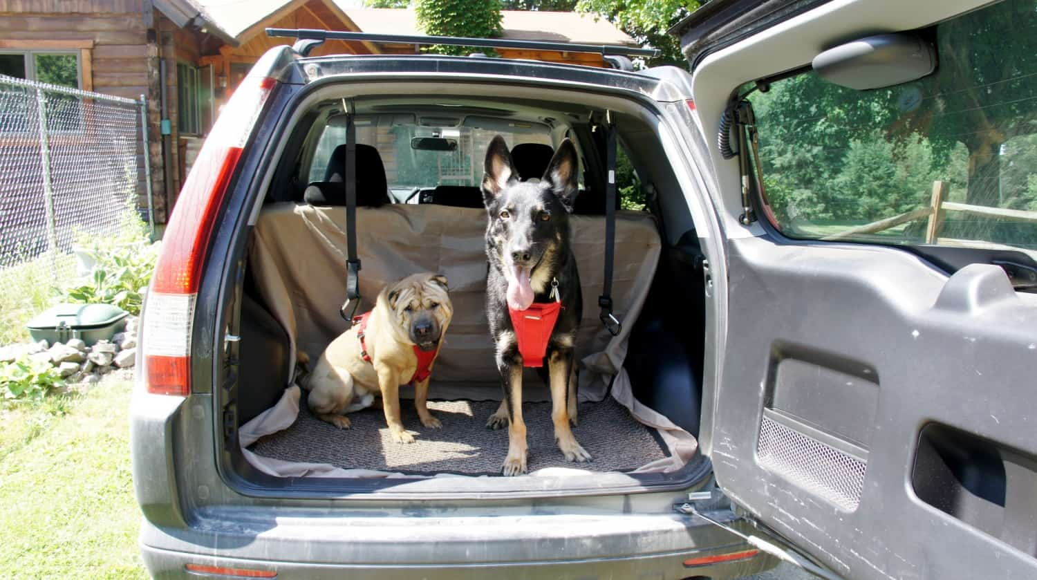 Ty and Buster in Rental Car