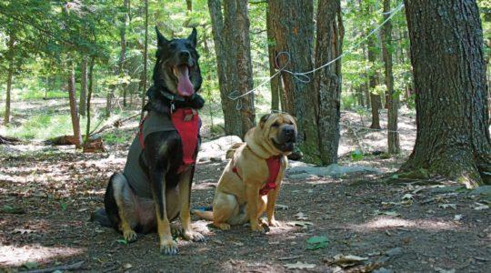 Buster and Ty at Sugarbush Farm - Woodstock, VT