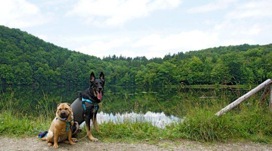 Ty and Buster at Marsh-Billings-Rockefeller Park - Woodstock, VT