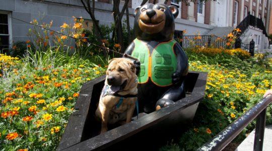 Ty with Teddy Bear - Church Street - Burlington, VT