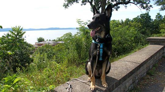 Buster in Battery Park - Burlington, VT