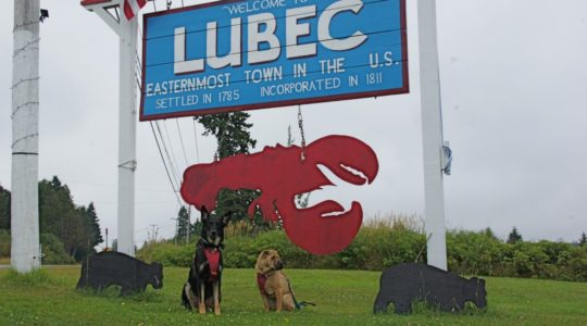 Buster and Ty - Lubec, ME