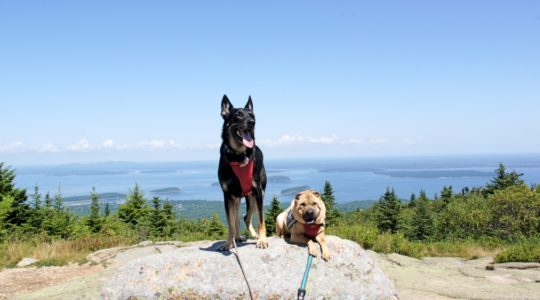 Buster & Ty on Cadillac Mountain, Acadia National Park - Bar Harbor, ME