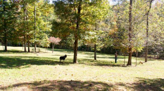 Four Paws Kingdom - Rutherfordton, NC