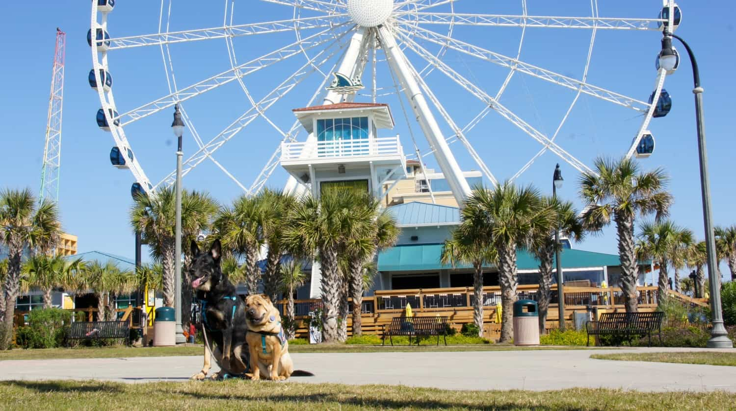 Dog Friendly Myrtle Beach in the Offseason
