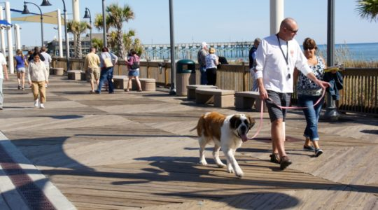 Dog on Boardwalk - Myrtle Beach, SC