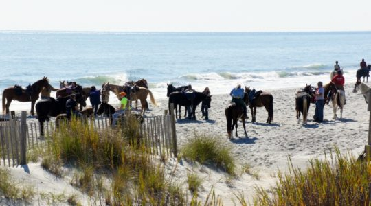 Horses on the Beach - Myrtle Beach, SC