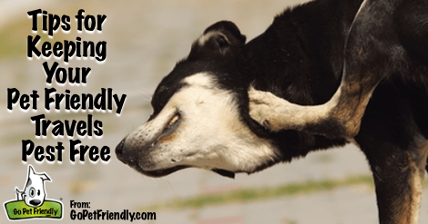 Tips for Keeping your Pet Friendly Travels Pest Free