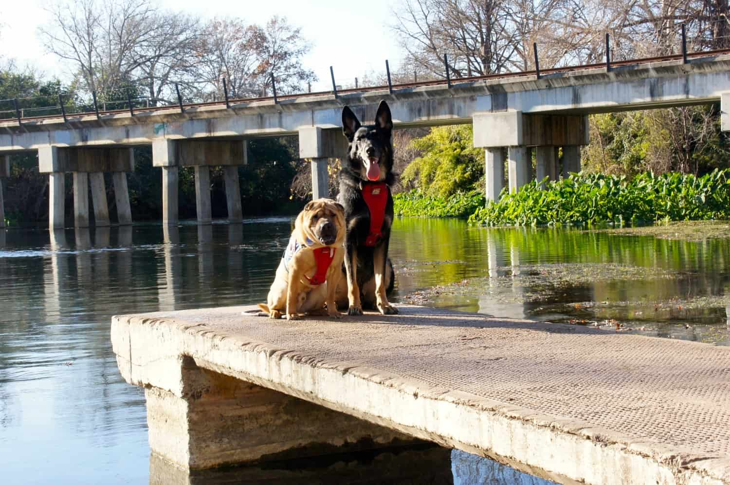 Pet Friendly Tour of Texas Hill Country