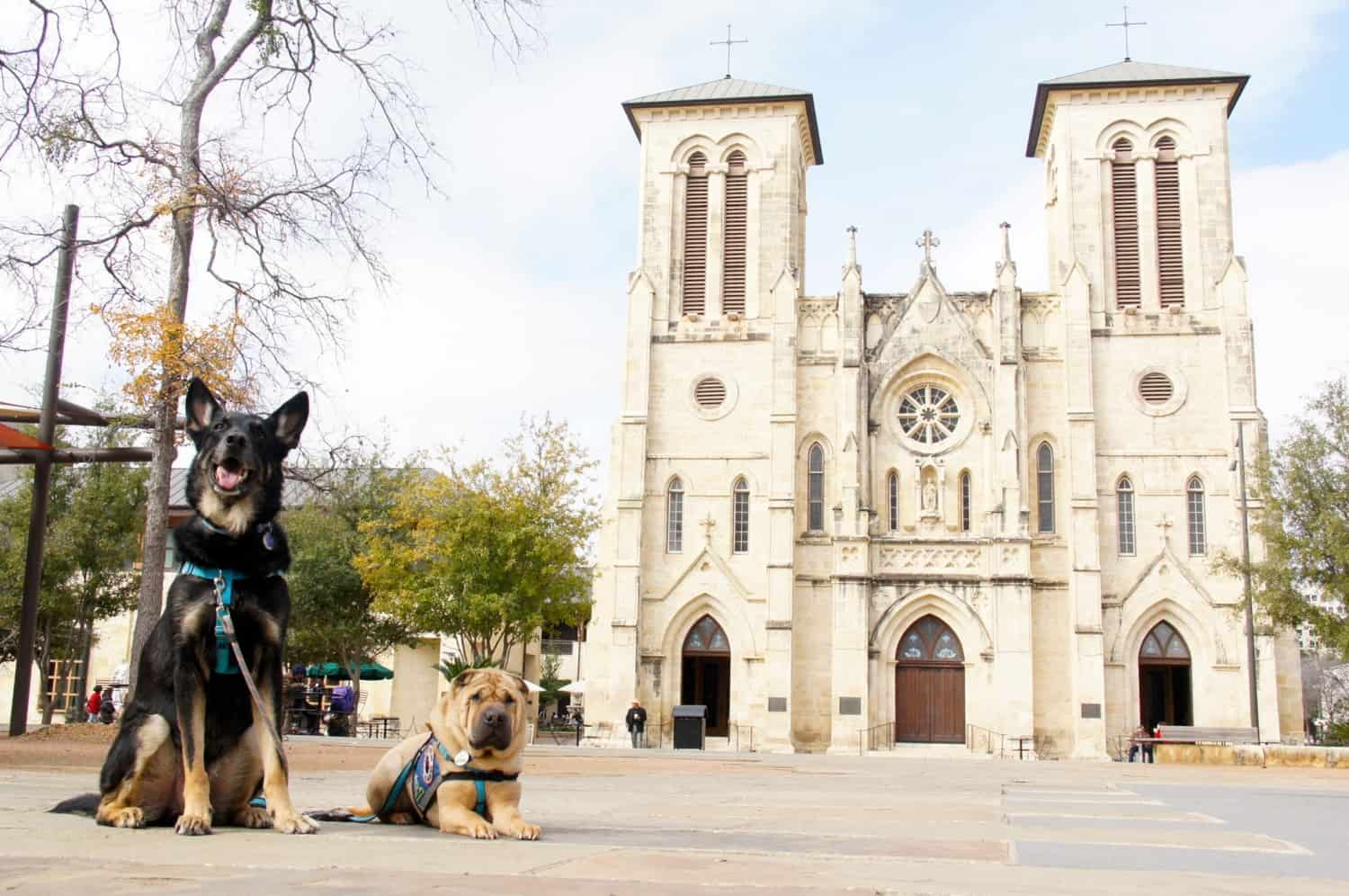 Dog Friendly San Antonio: Beyond the River Walk