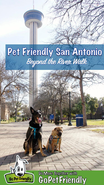 A Shar-pei and German Shepherd sitting on a path in a dog friendly park in San Antonio, TX