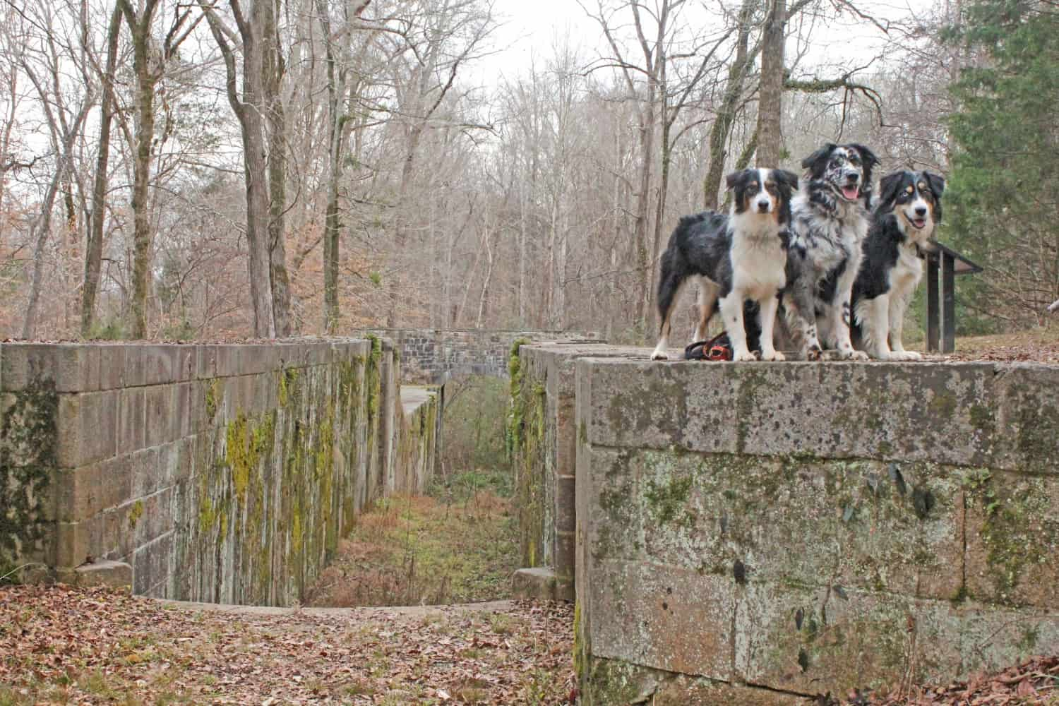 Dog Friendly Hike at Landsford Canal State Park