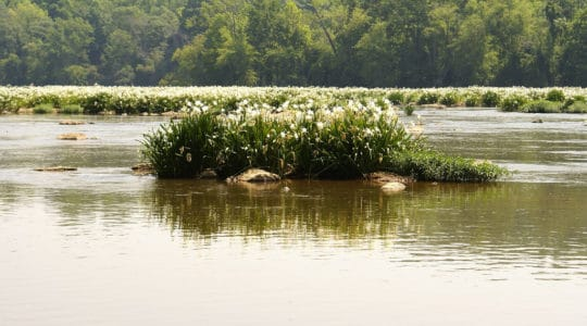 Landsford Canal State Park - Catawba, SC