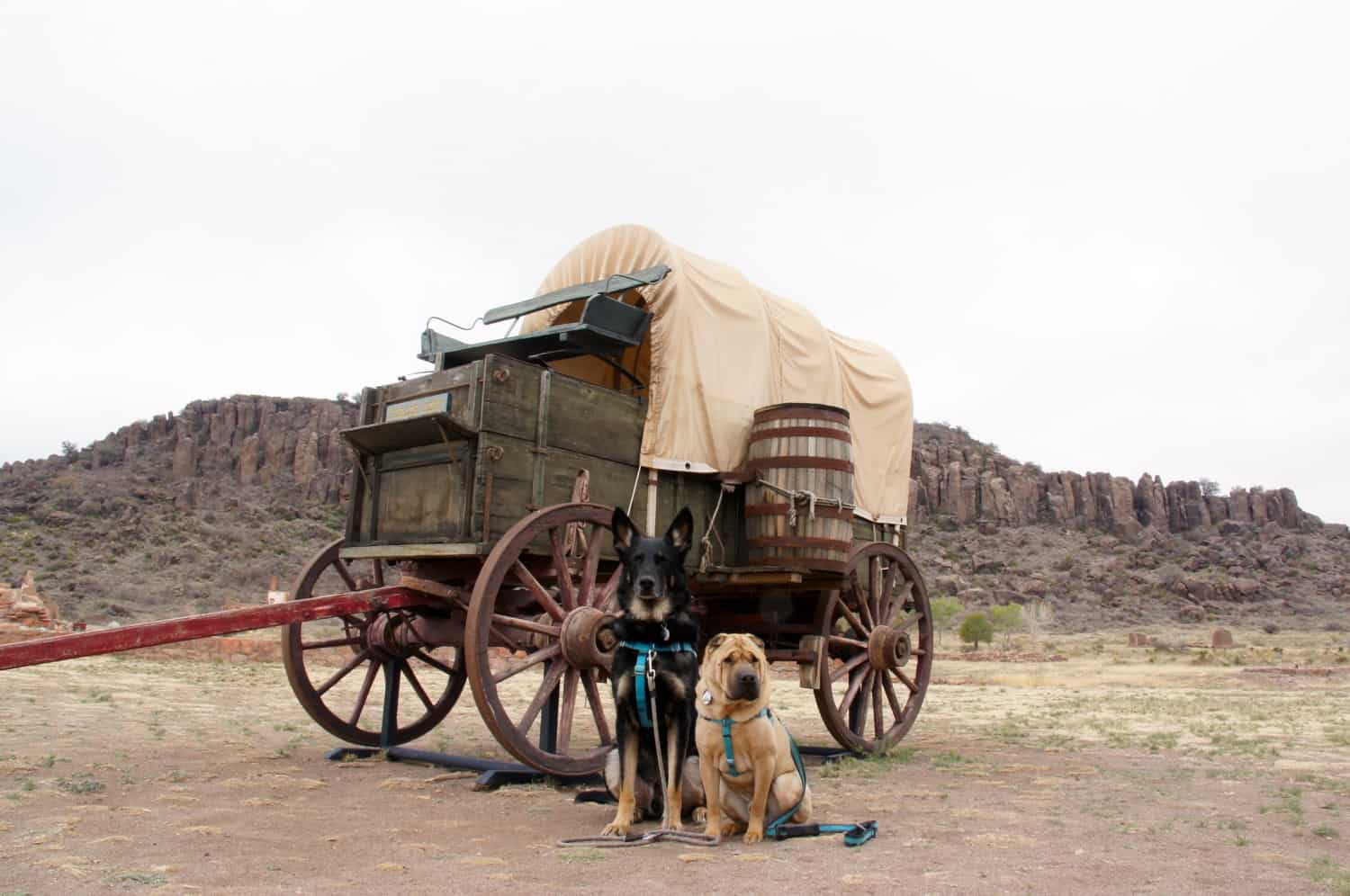 Dog Friendly Far West Texas – Marfa, Fort Davis, Alpine and Marathon
