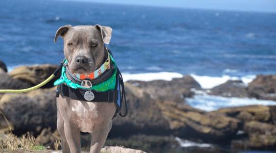 Sadie Wonder Pup