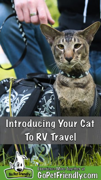 Cat with a collar and leash sitting in a carrier with man crouching behind introducing the cat to RV travel