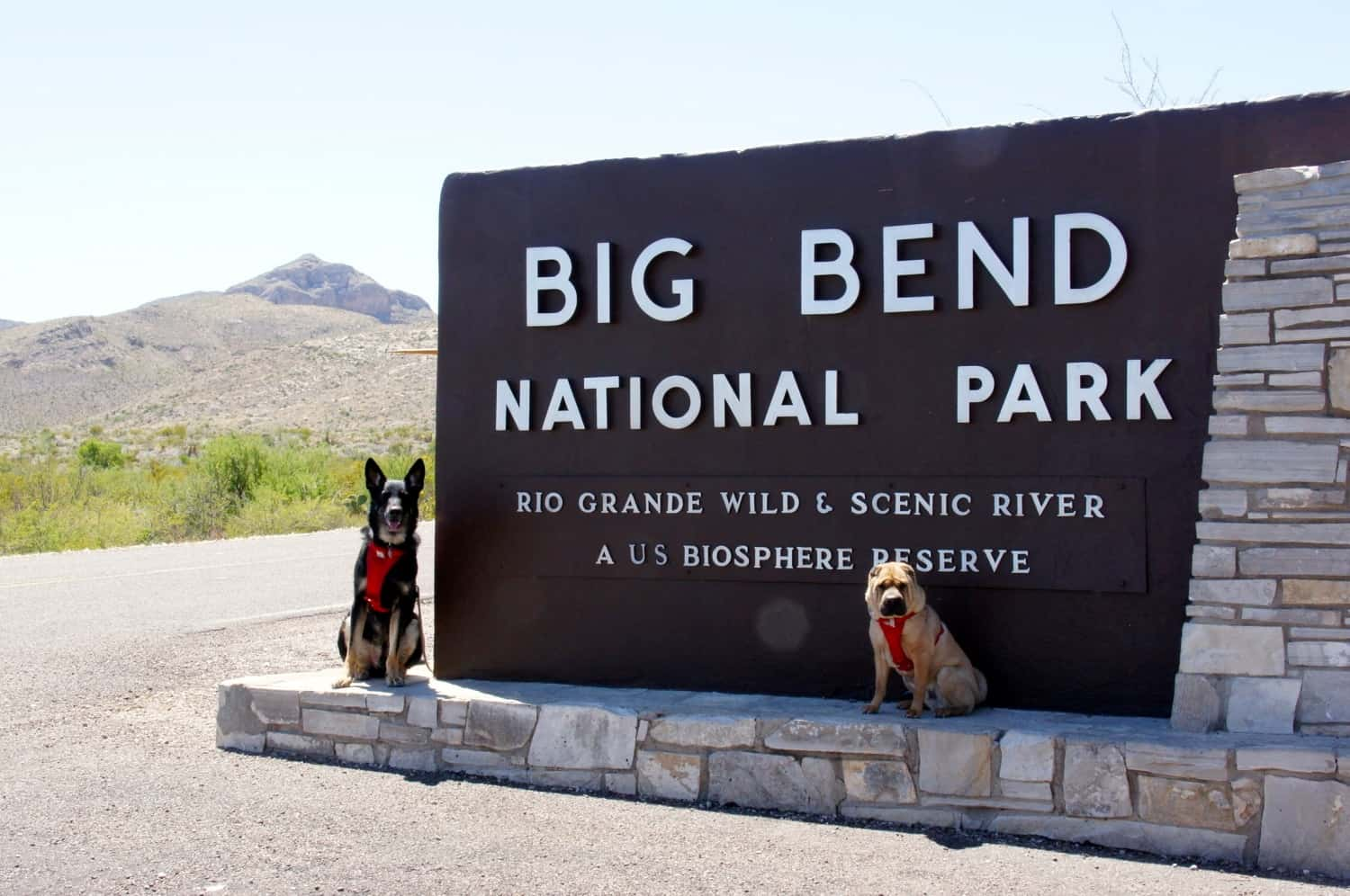 Buster and Ty at Big Bend National Park - TX