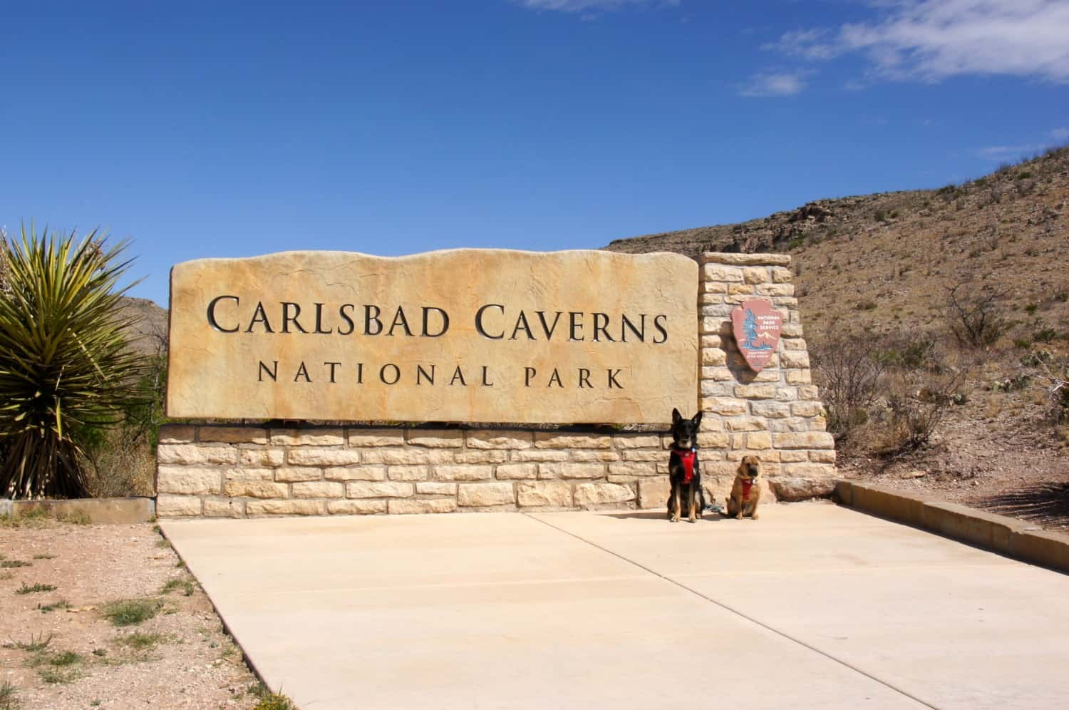 Ty and Buster - Carlsbad Caverns, NM
