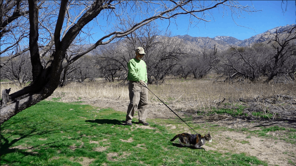 Hans walking Rosie the cat on a leash in a pet friendly campground while they travel in an RV