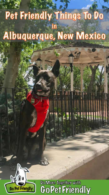 Brindle dog in red harness in the plaza in dog friendly Albuquerque, NM
