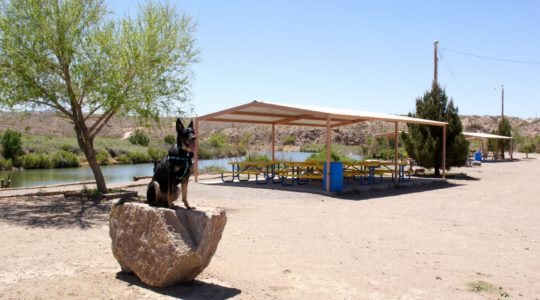 Dog Park - Truth or Consequences, NM