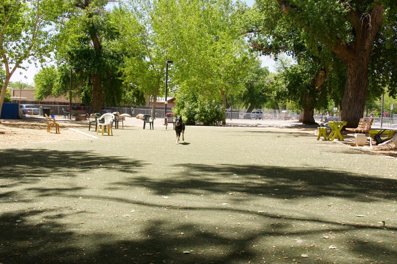 Dog Park - Albuquerque, NM