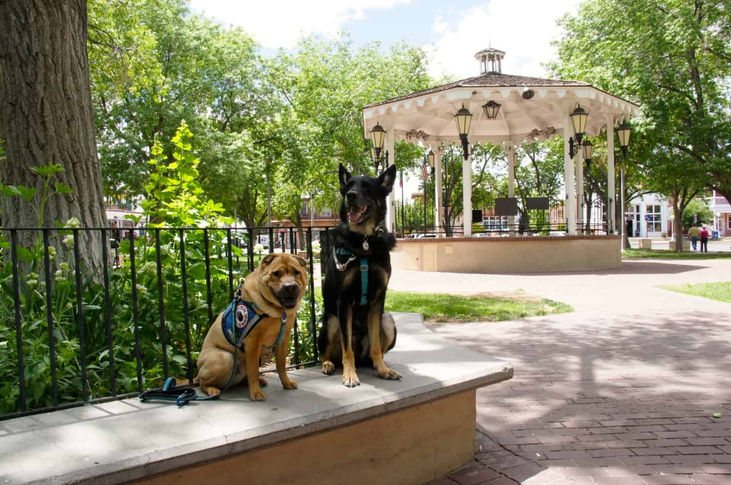 Albuquerque - Dogs Get Their Kicks on Route 66